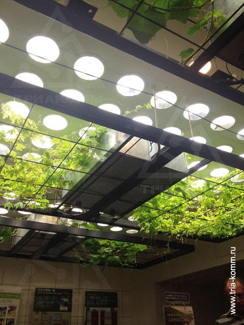 Информация о посещении Токио для изучения экоустойчивых зданий и энергоэффективных инженерных систем в Японии